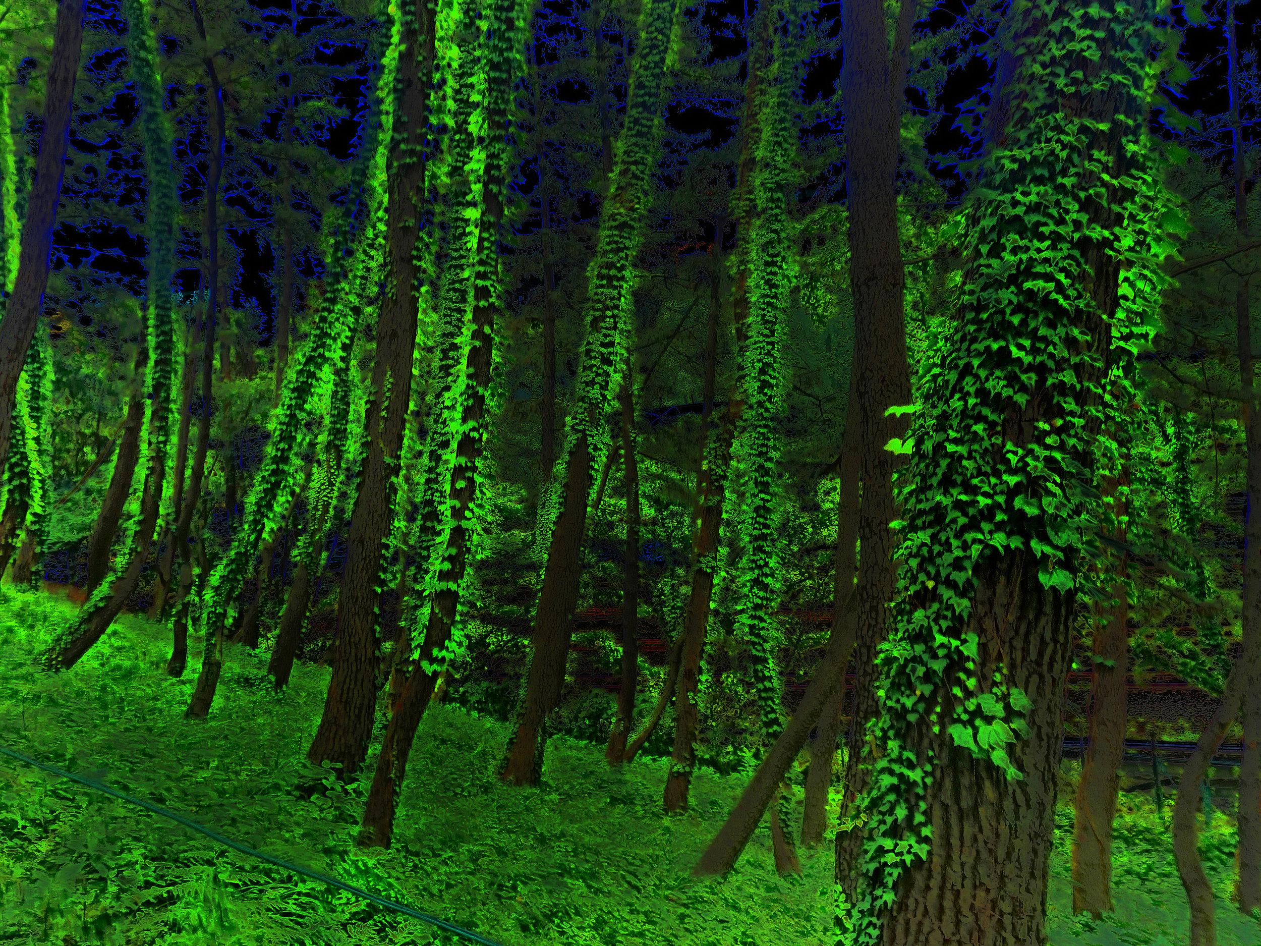 Ivy Plants, Tokyo, from 2011-phenomena, 2011