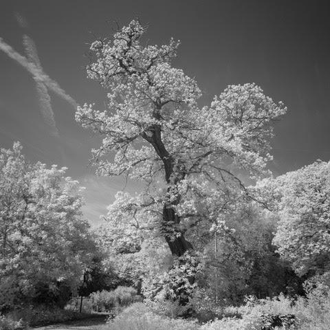 David Trees.jpg
