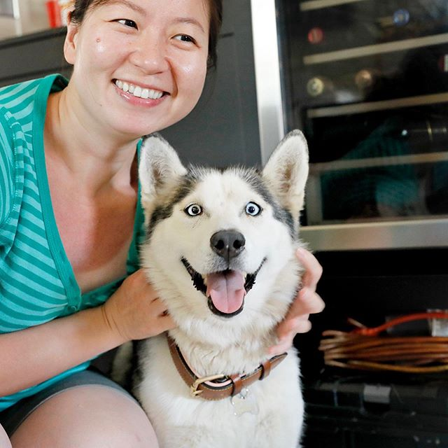 The happiest husky is currently in my friend's house right now because she got Adopted from @baldwinparkanimalslaco 😄 Look at that smile!! . (By the way, my friend got sunburned so she looked like she was wearing a white tank top inside her shirt 😂😂) . . #huskylove #baldwinparkshelter #loveallanimals #bestfriend #mensbestfriend #ladiesbestfriend #happyhusky #❤️ #🐶