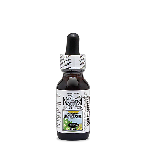 Purslane Tincture (25ml)