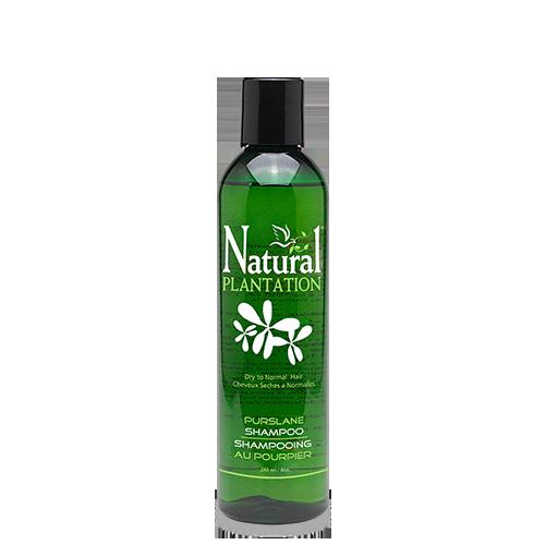 Purslane Shampoo