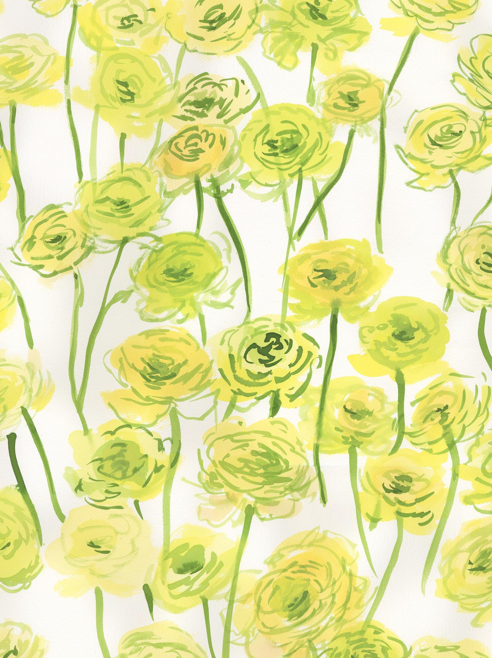 Yellow Ranunculus, Ekelund Studio