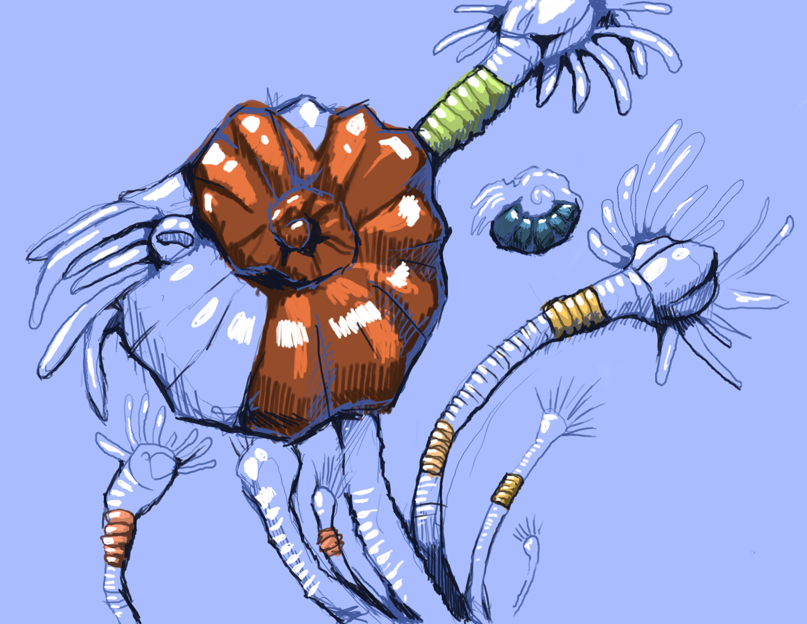 ammonites.jpg