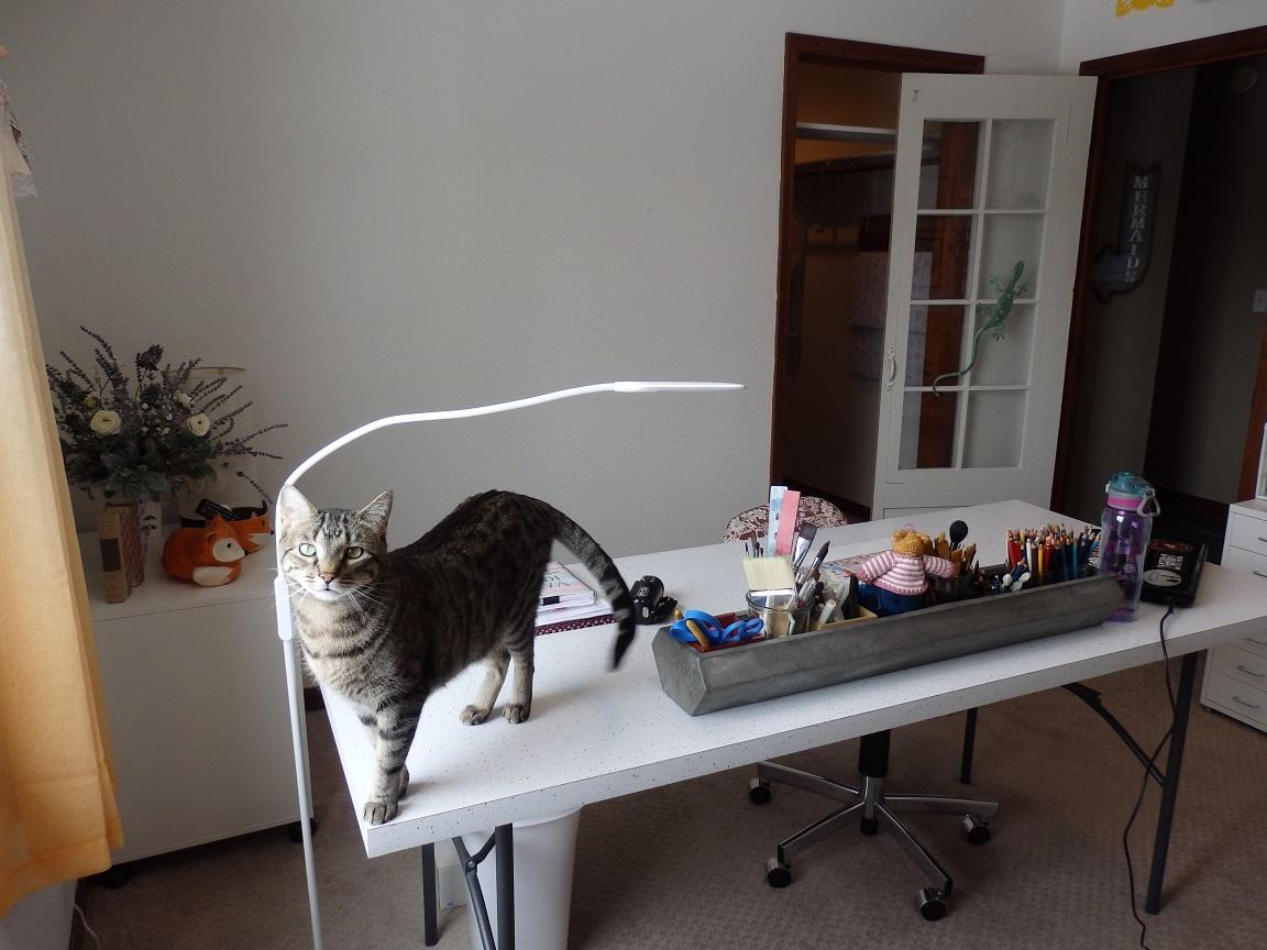 studio cat under 1 mb.jpg
