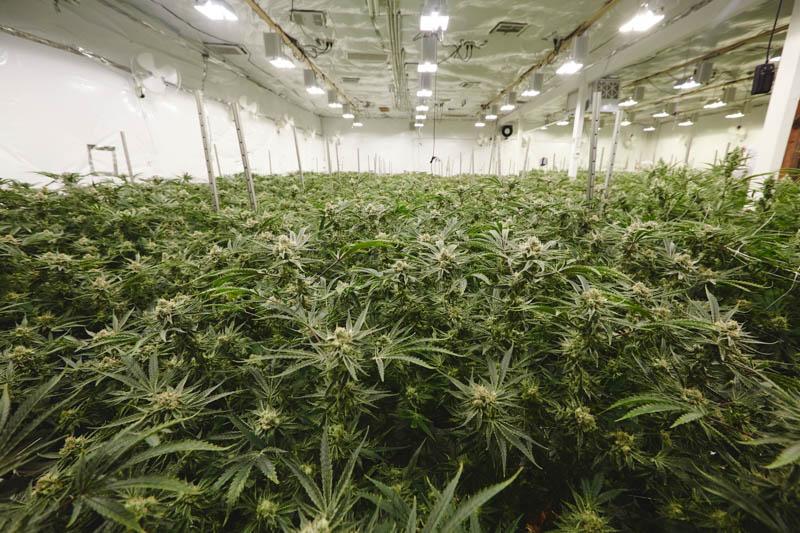 THC_Design_LosAngeles_Cannabis_.jpg