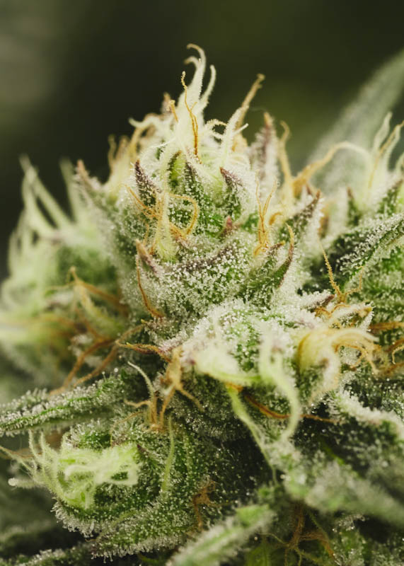 THC_Design_LosAngeles_Cannabis_0214.jpg