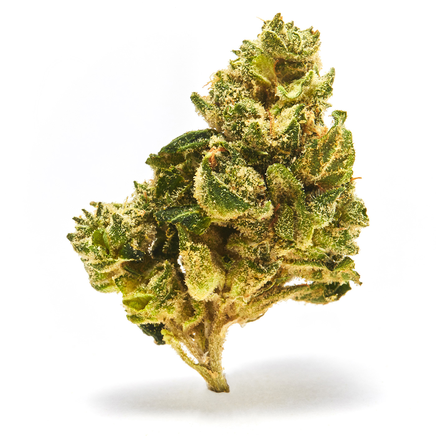 THCDesign_LemonMerengue_Nug_Cannabis_2167.jpg