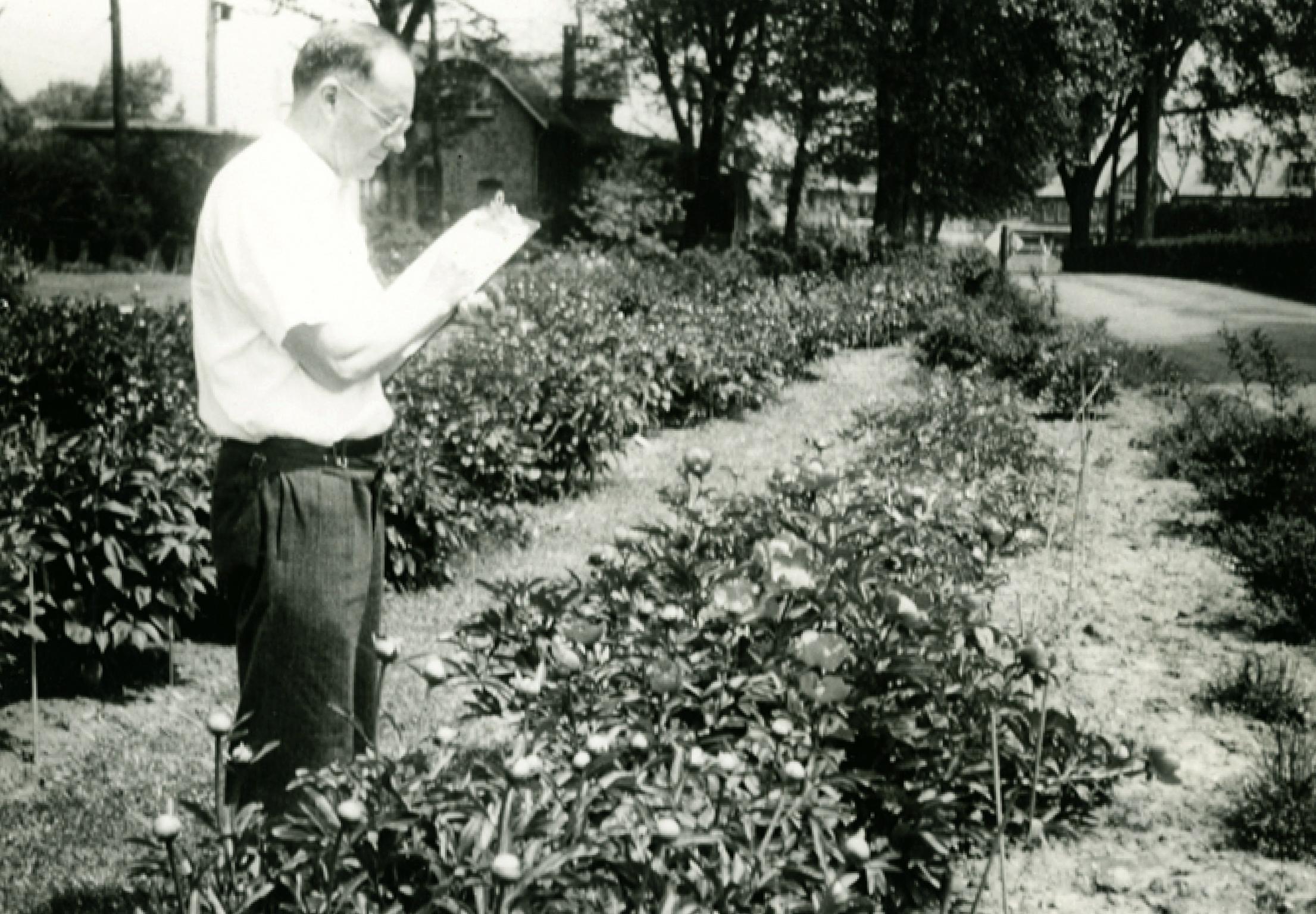 Dr. John Caspar Wister amidst Tyler's peony beds.  Photo courtesy of Tyler Arboretum.