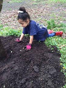 Annilyse Jones of Secane focused on mulch at Little Crum Creek Park