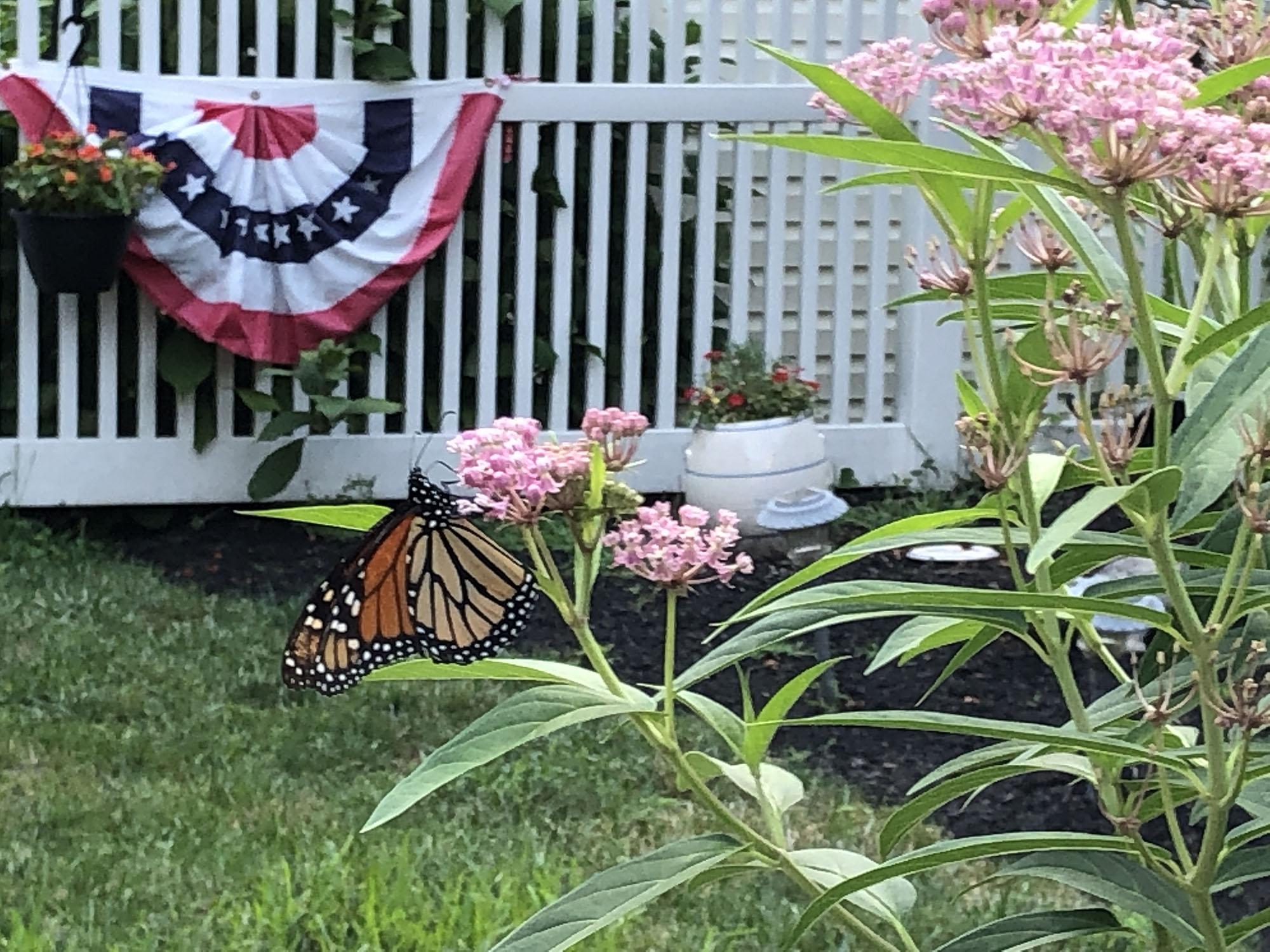 8-16 w-wildlife-butterfly Venuto.jpeg