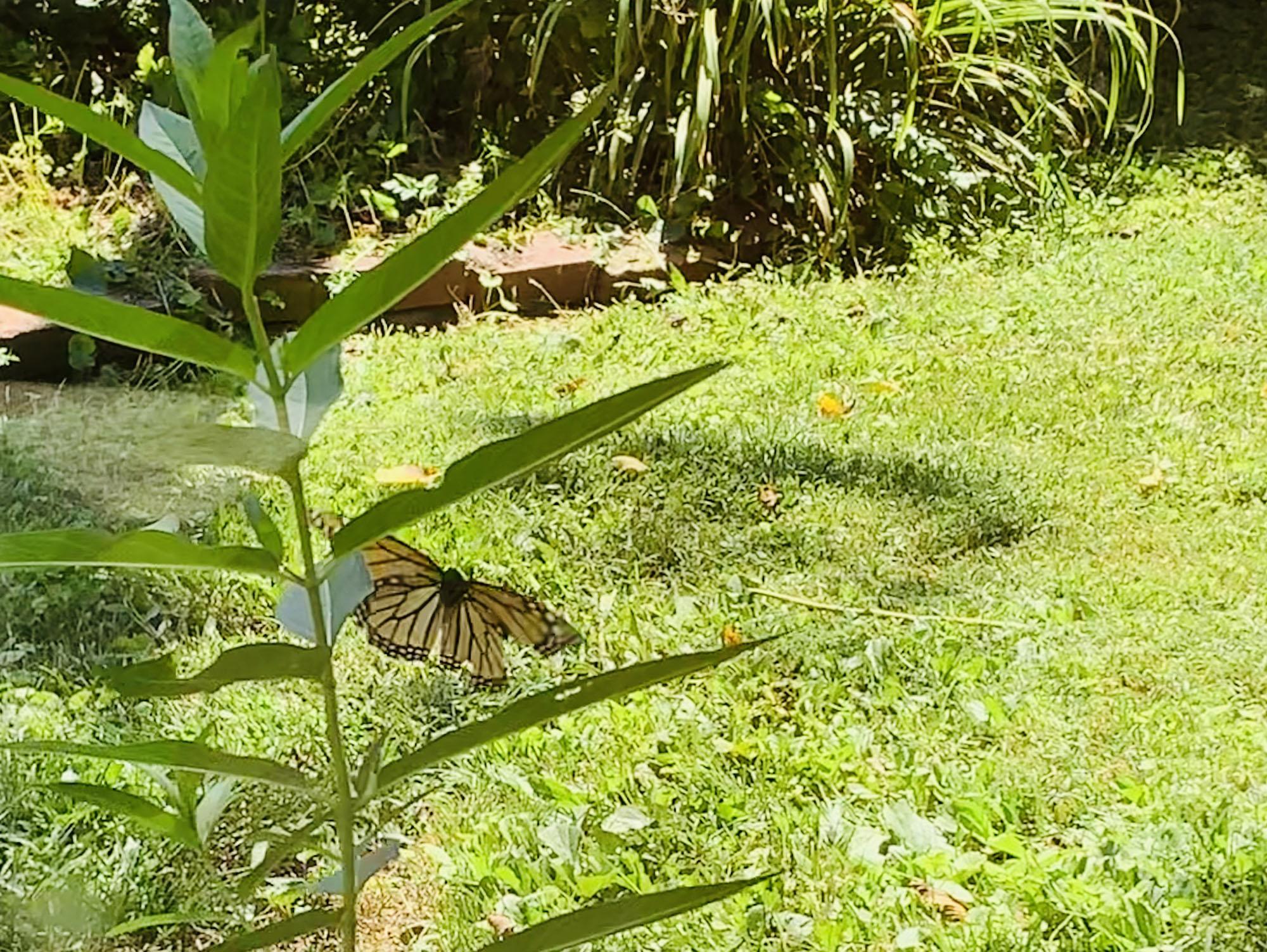 8-16 w-wildlife-butterfly Degnan.jpeg
