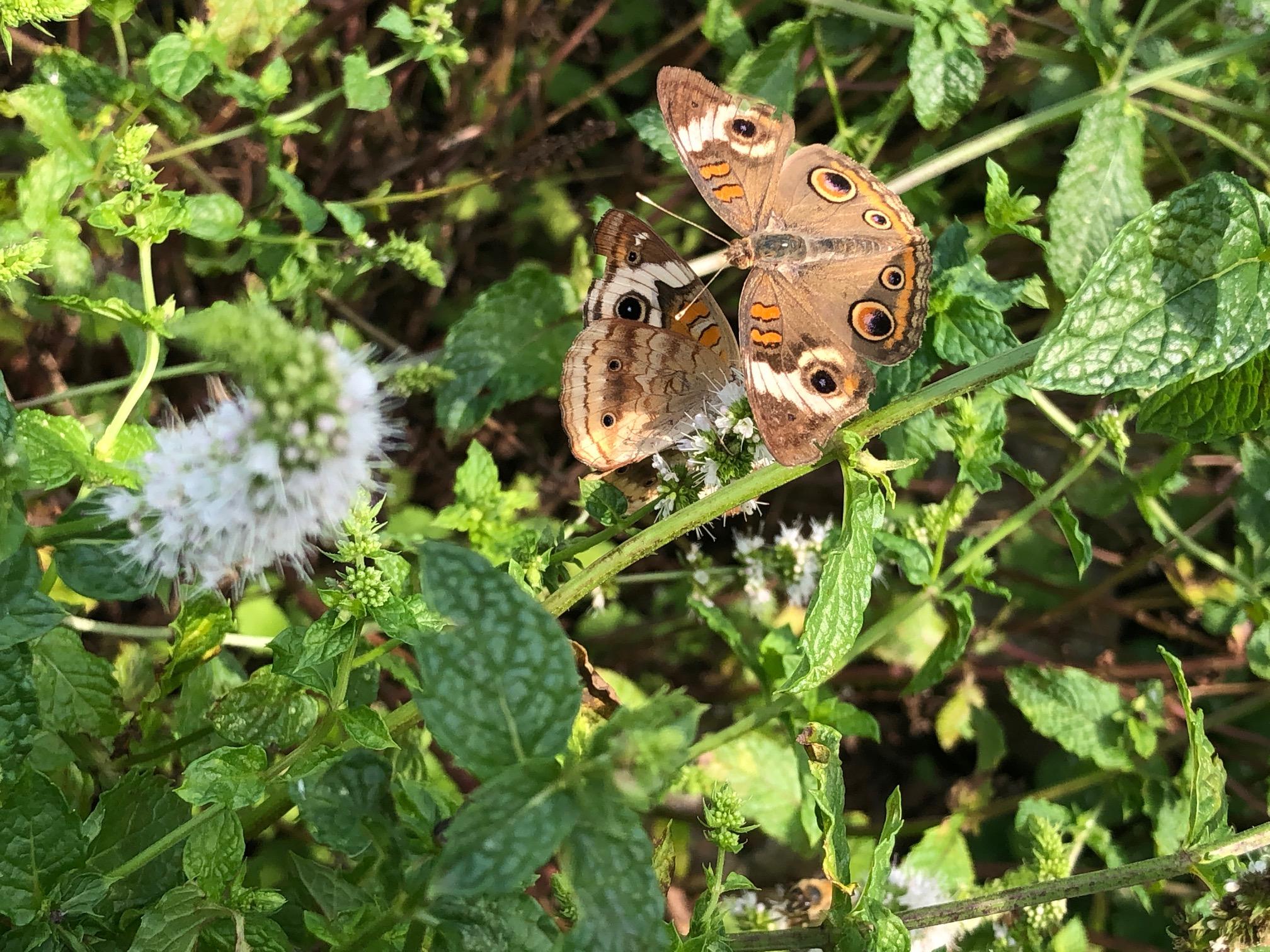 8-16 w-wildlife-chris_s butterfly.jpg