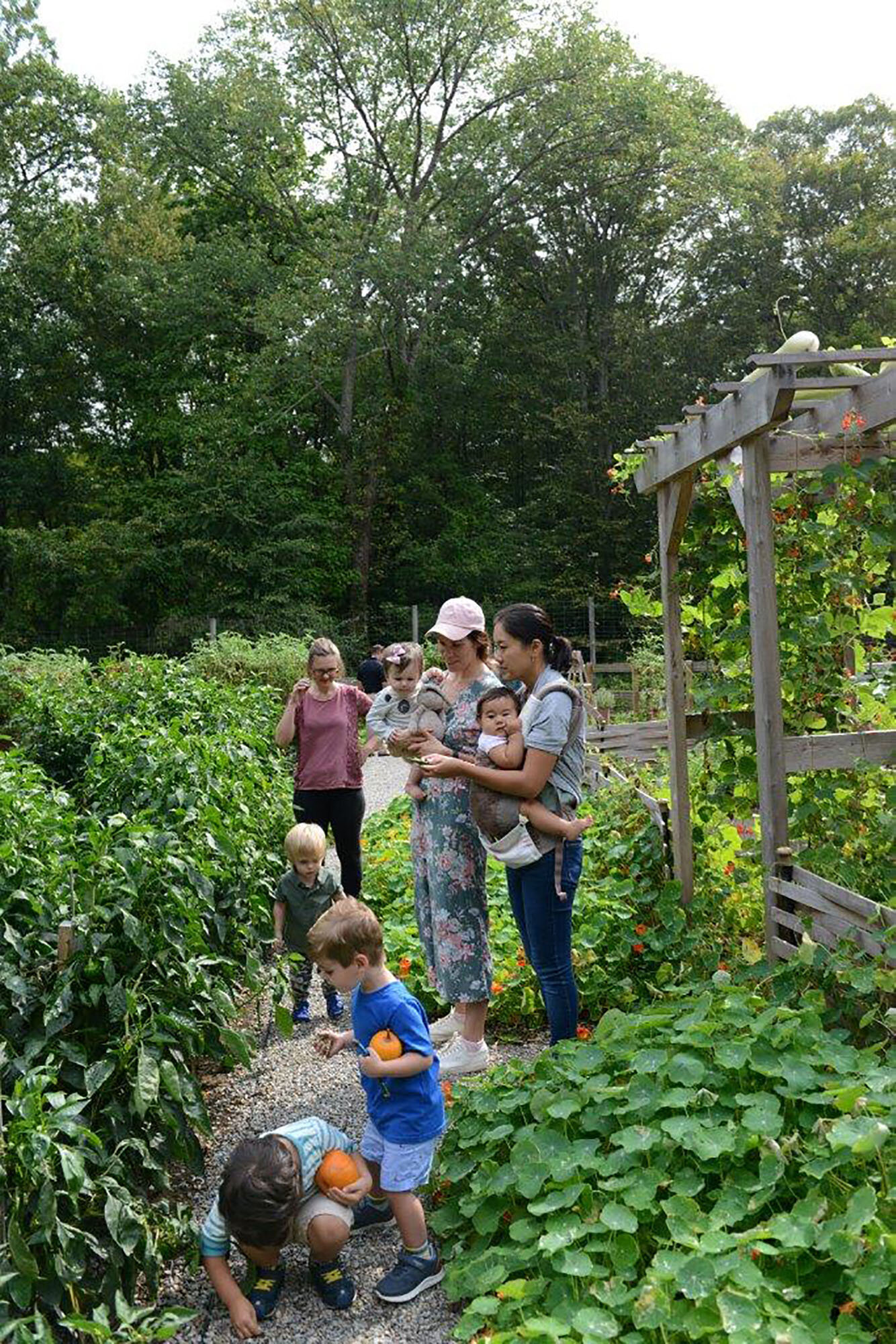 Toddlers, mothers, and others meander among garden beds at Tyler.  Photo by Tracy Clark.