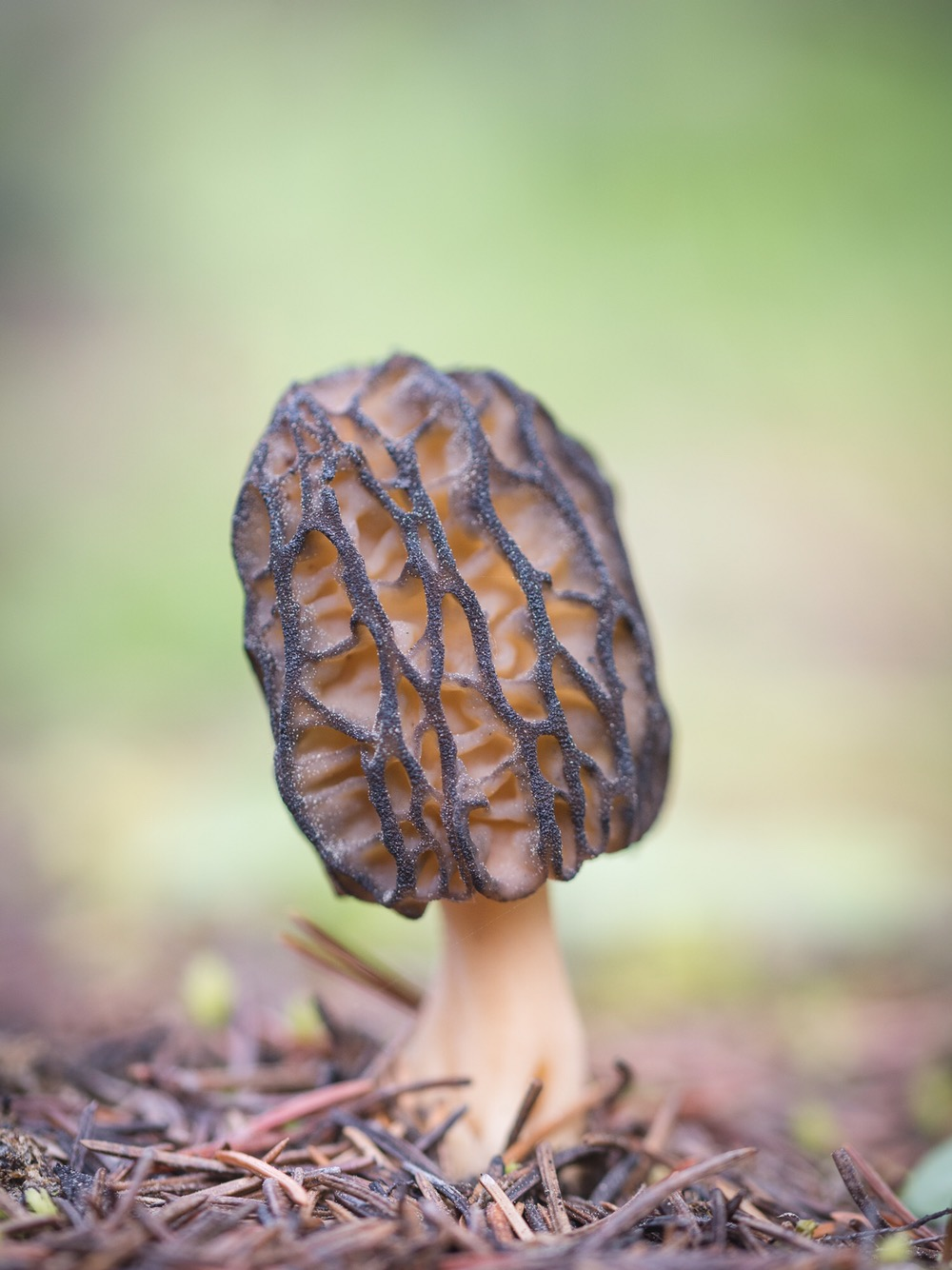 Fungi mushrooms Luke Mikler photography mycology
