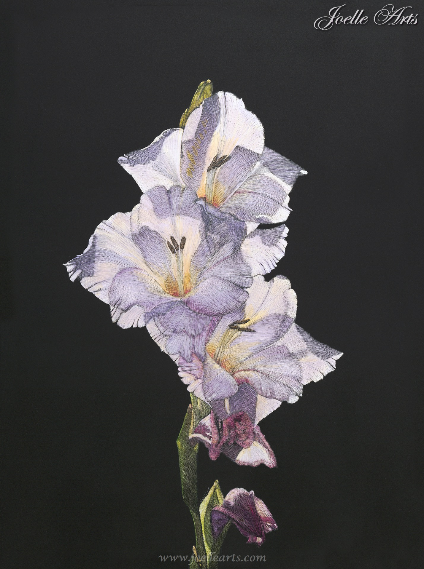 """God's Glad"" The Iris Flower"