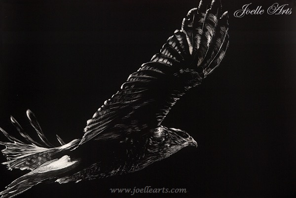 """""""Red Tail Hawk"""""""