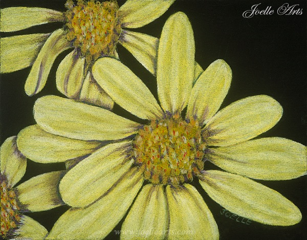 """""""Barb's Daisies"""""""