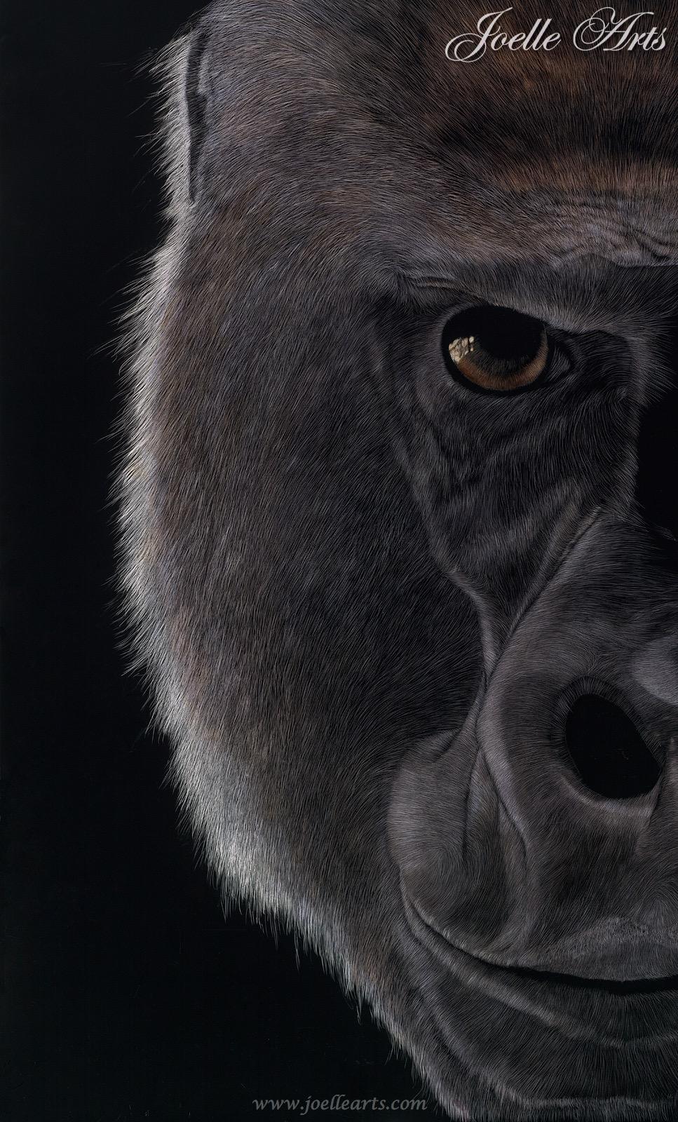 """Silverback Gaze"" The Gorilla"