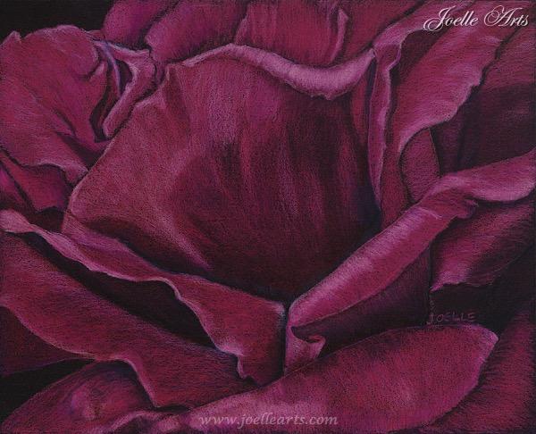 """Janey's Rose"" The Rose"