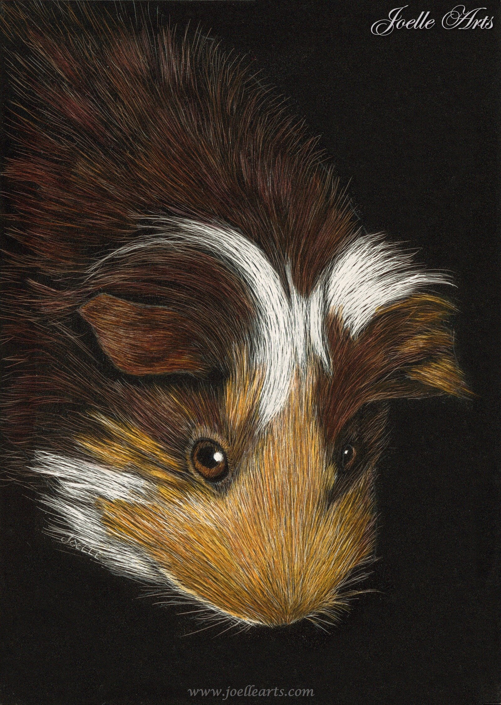 """Miley"" The Guinea Pig"