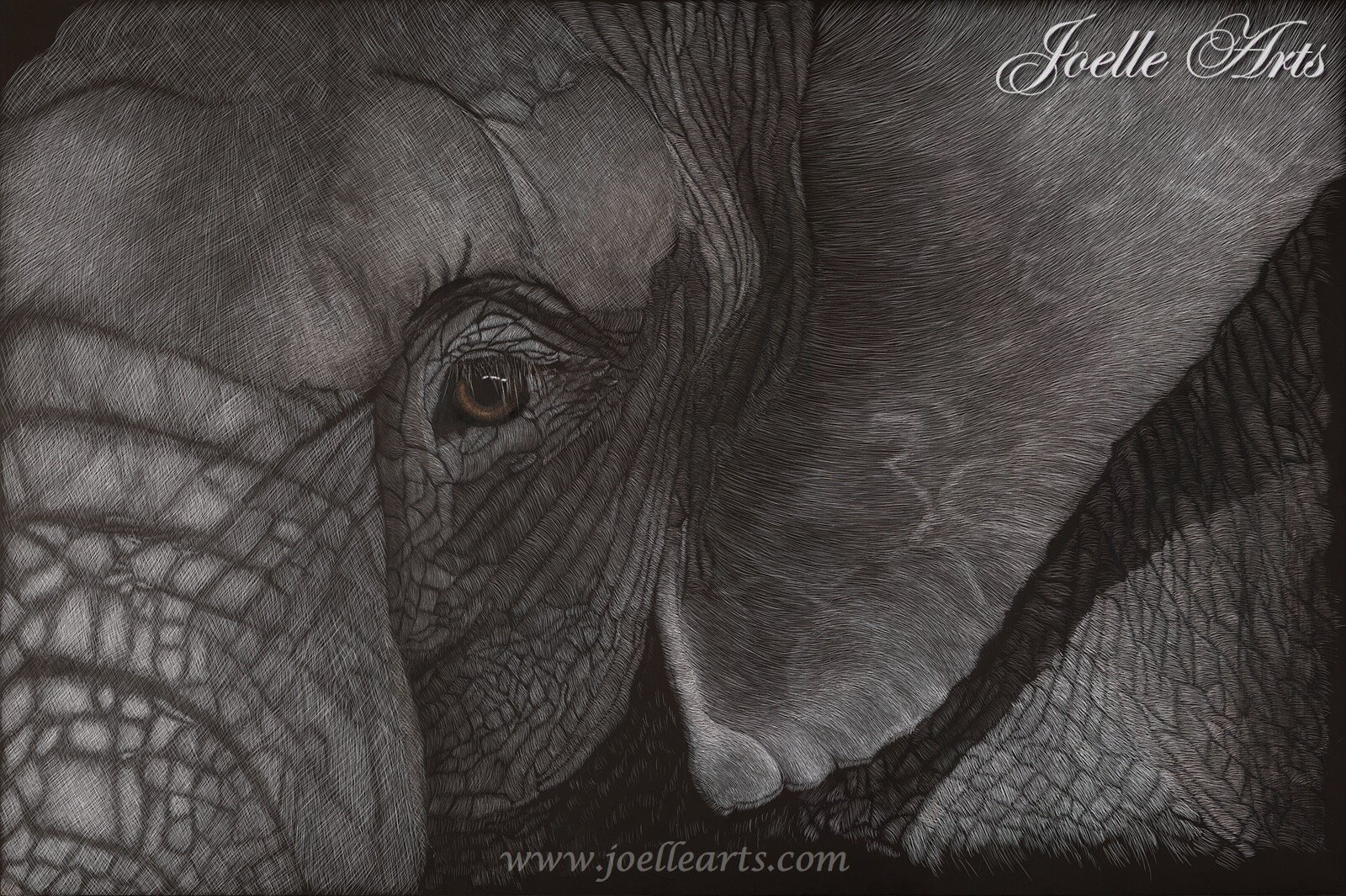 """Textured Tonnage""  The Elephant"