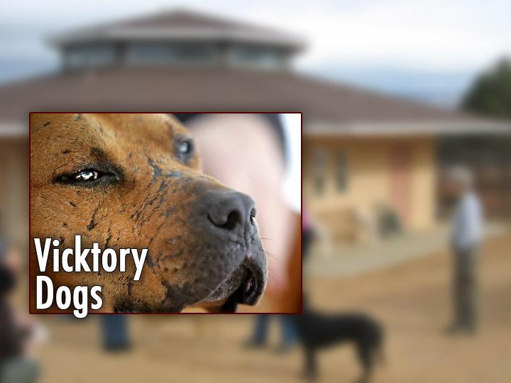 vicktorydogs-plasma.jpg