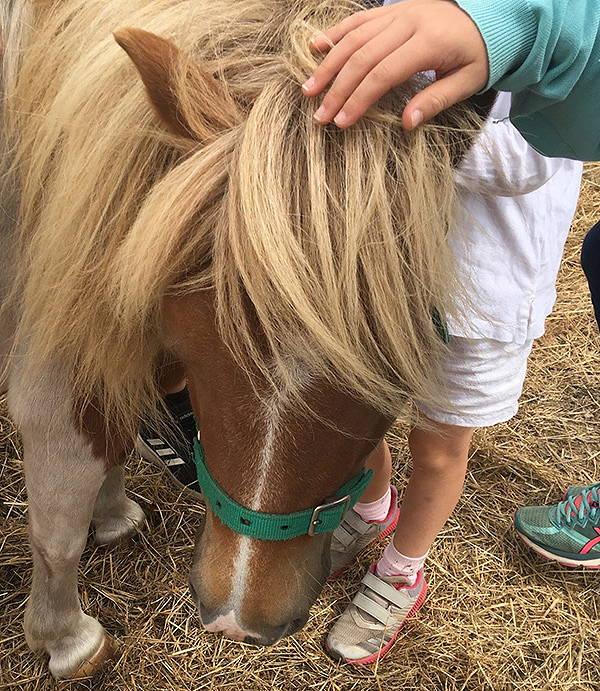 Pony IMG_4445.jpg