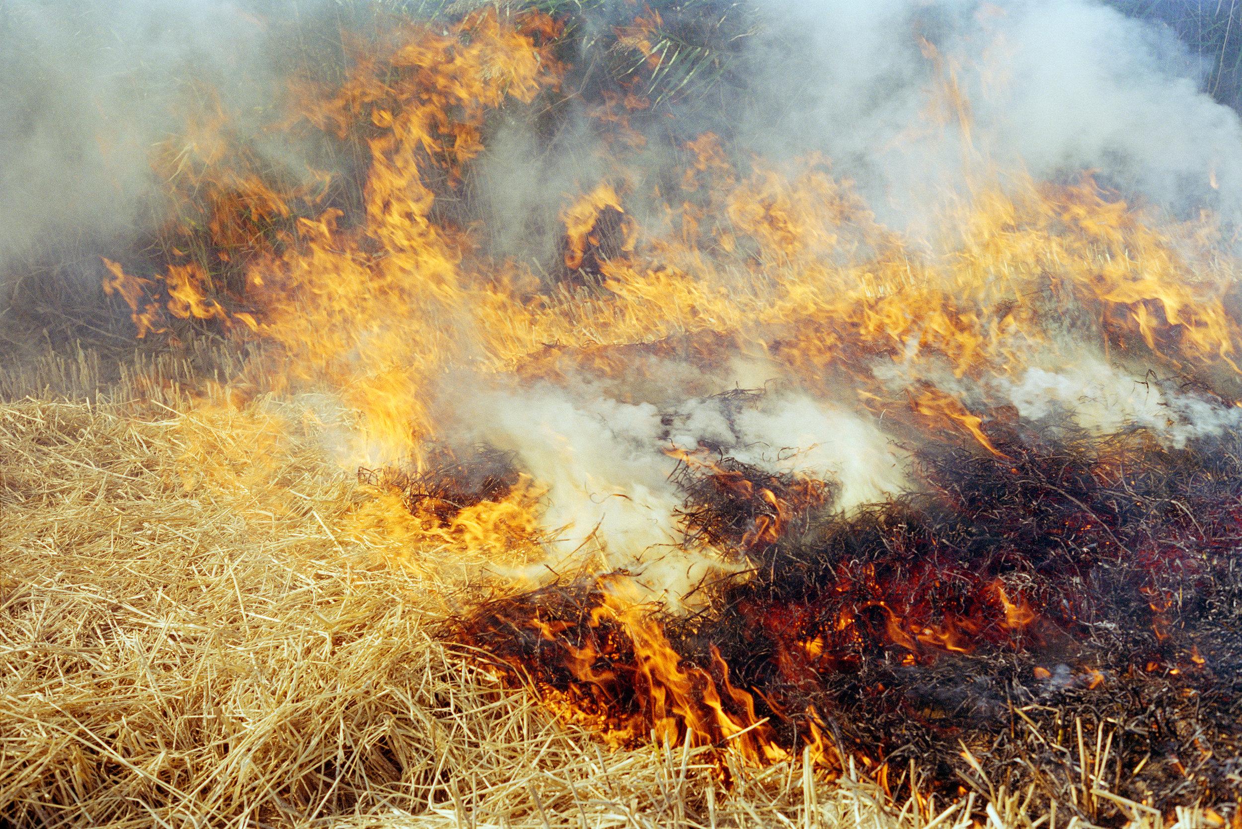 fire6.jpg