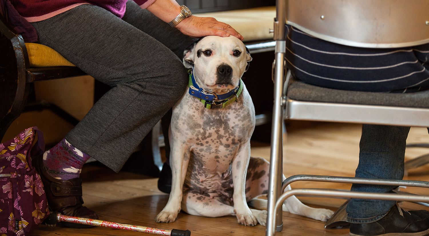 lewes-open-door-homeless-charity-dog_03a.jpg