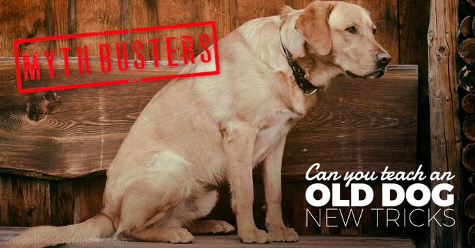 old dog.jpg