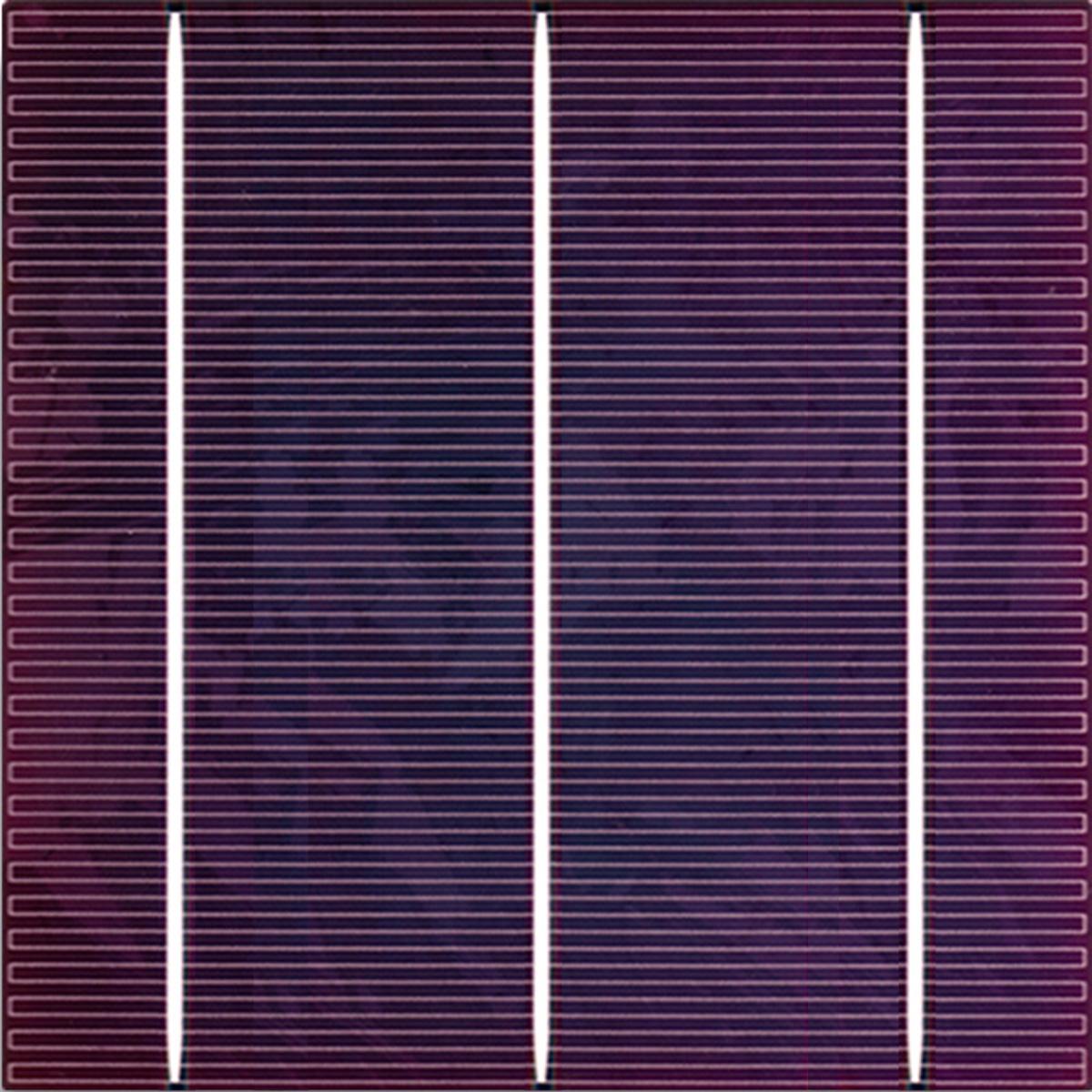 c-lavender.jpg