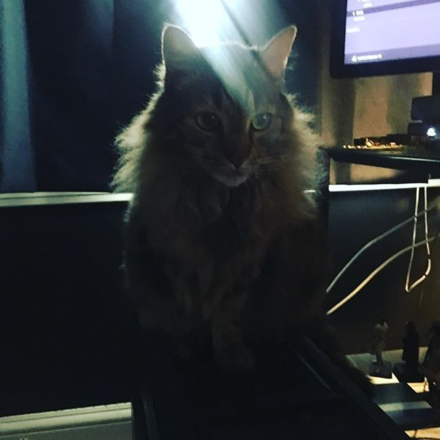 #studiocat has found a new favorite seat..... on top of my main editing computer!!!! No way this can possibly end in tragedy, right?!?!? #postproduction #filmmaking #editing #davinciresolve #catsofinstagram #filmstudio #posthouse #cat #troublemaker