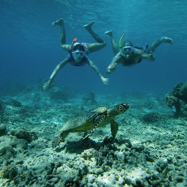 L'île réserve des surprises époustouflantes comme la plongée avec des tortues mais pas seulement…