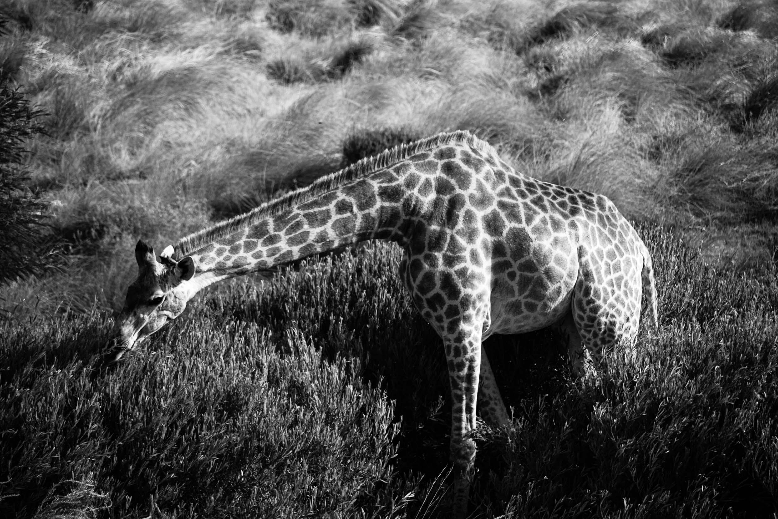 South-Africa-2013-9.jpg