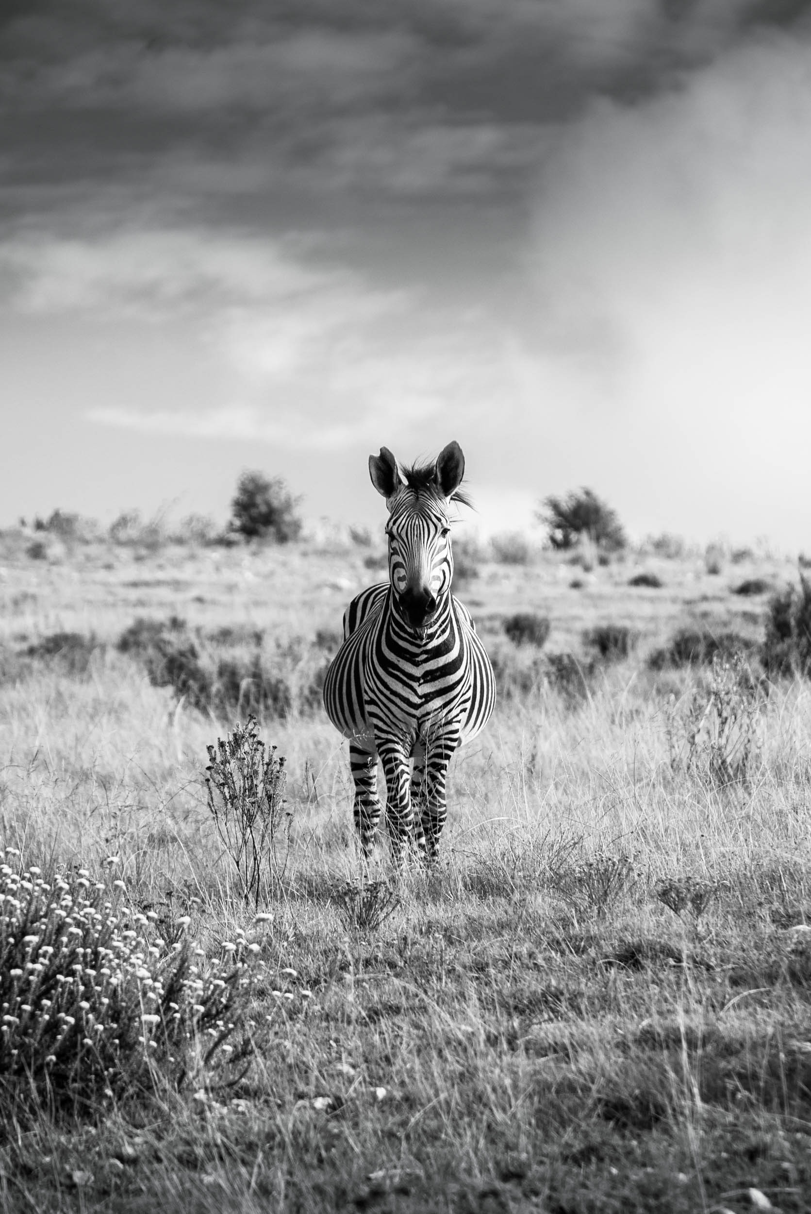South-Africa-2013-21.jpg