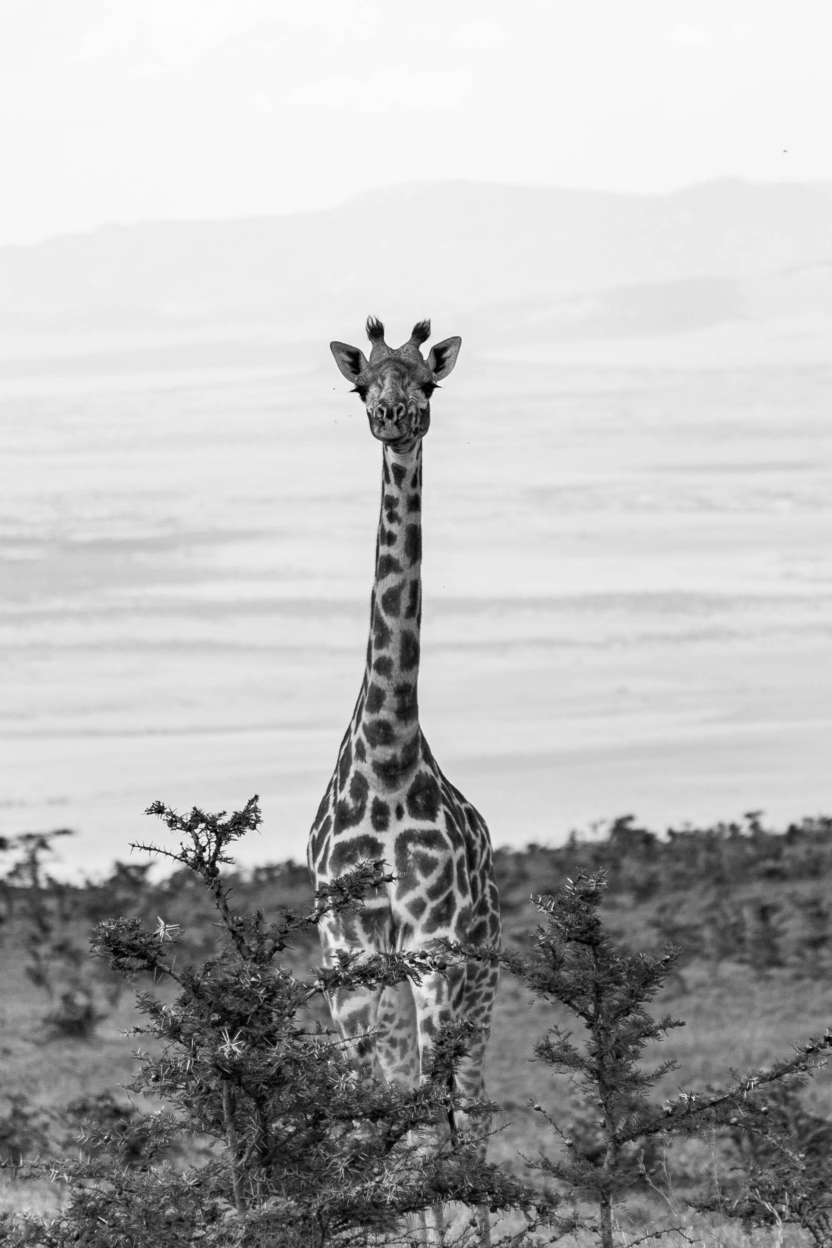 Tanzania-Safari-2010-94.jpg