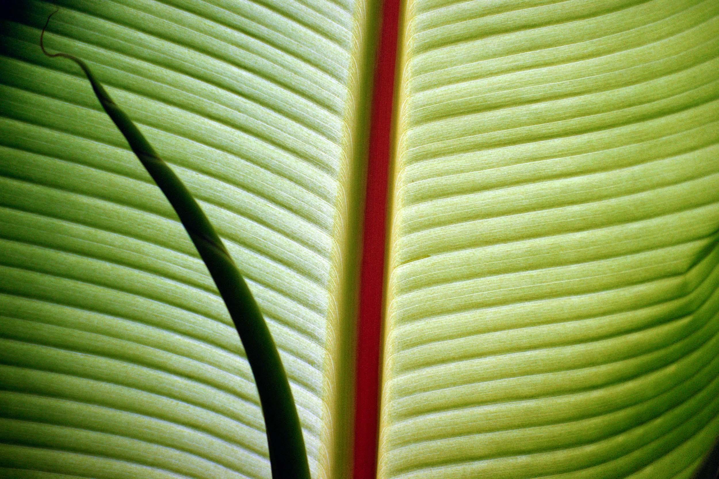 Leaf Detail Santa Barbara, CA 2001