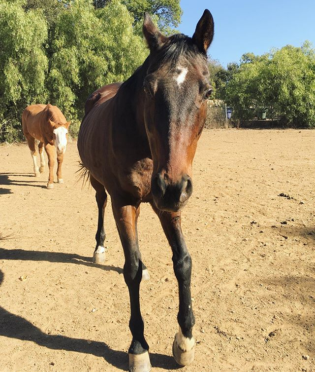 """Truman was the first horse I bought with the intention of """"flipping"""" (buying, training/rehabilitating, and selling). An article detailing his story is coming soon!"""