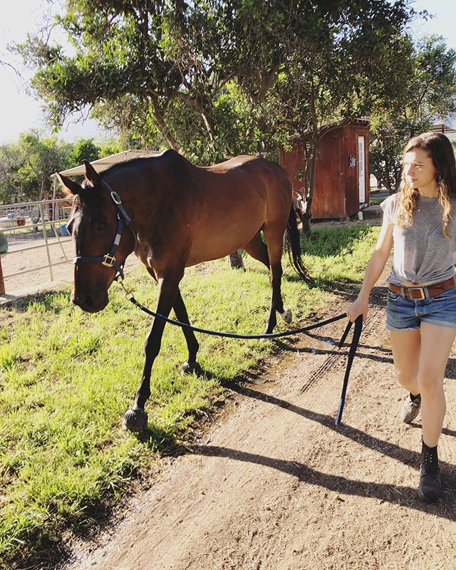 If you love piña coladas and long walks on the ranch, join my email list! It's currently a monthly update on my riding and training ventures. Sign up on the blog, link in bio! 🐎