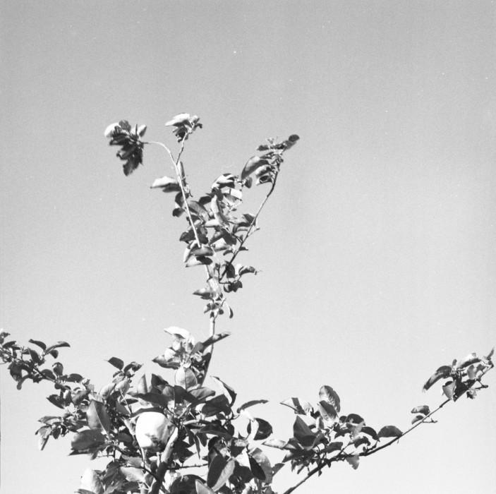 Civita, 2017 archival pigment print 5 × 5 inches