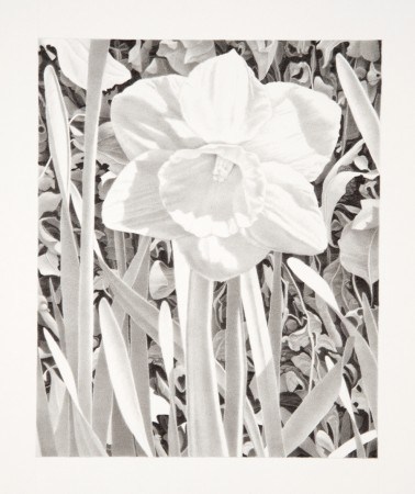 Bill Richards, Secret Garden, Central Park #3, 2004, graphite on paper, 19 x 17 inches