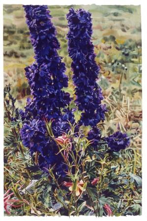 Carolyn Brady, Purple Black Delphinium, 1987, watercolor on paper, 69 x 44.5 inches