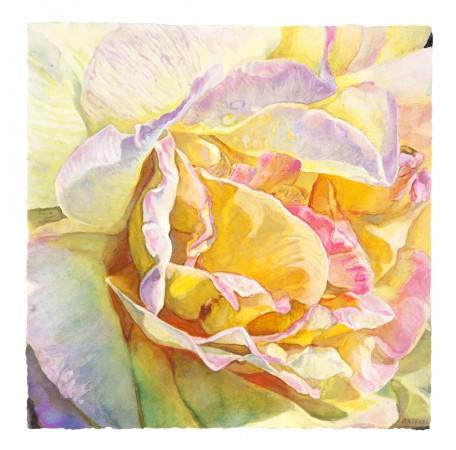 Joseph Raffael, Golden Moment, 2017, watercolor on paper, 16 x 16 inches