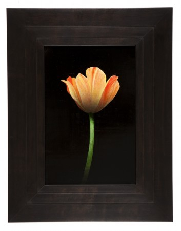Michael Gregory, Untitled (tulip), 2012, oil on panel, 17.5 x 13.5 inches