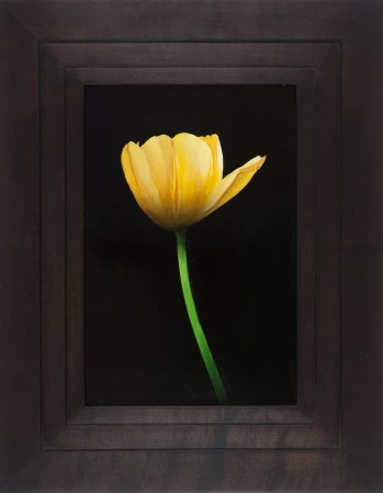 Michael Gregory, Untitled (tulip), 2014, oil on panel, 17.5 x 13.5 inches