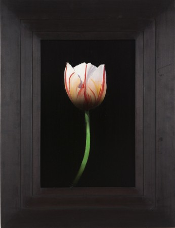 Michael Gregory, Untitled (tulip), 2014, oil on board, 17 x 13 inches