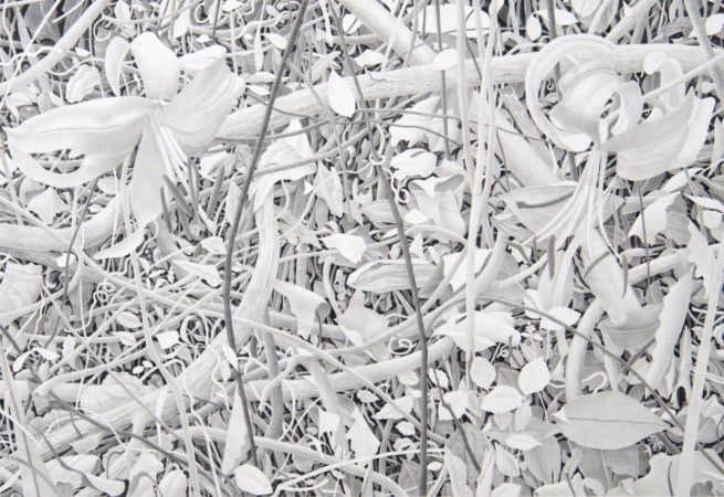 Flowers and Branches, 2009, graphite on paper, 17 x 21.5 inches