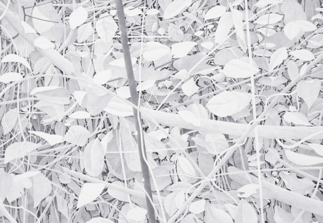 Crossed Branches, 2013, graphite on paper, 19 x 26.5 inches