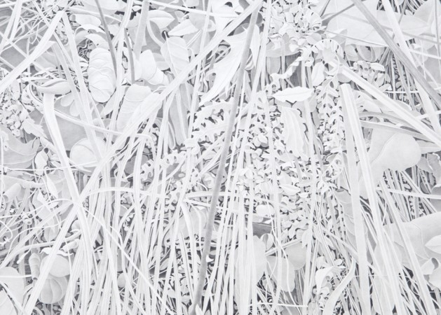Reeds and Ferns, 2013, graphite on paper, 17 x 20.5 inches
