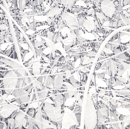 Bending Branches, 2014, graphite on paper, 19 x 19 inches